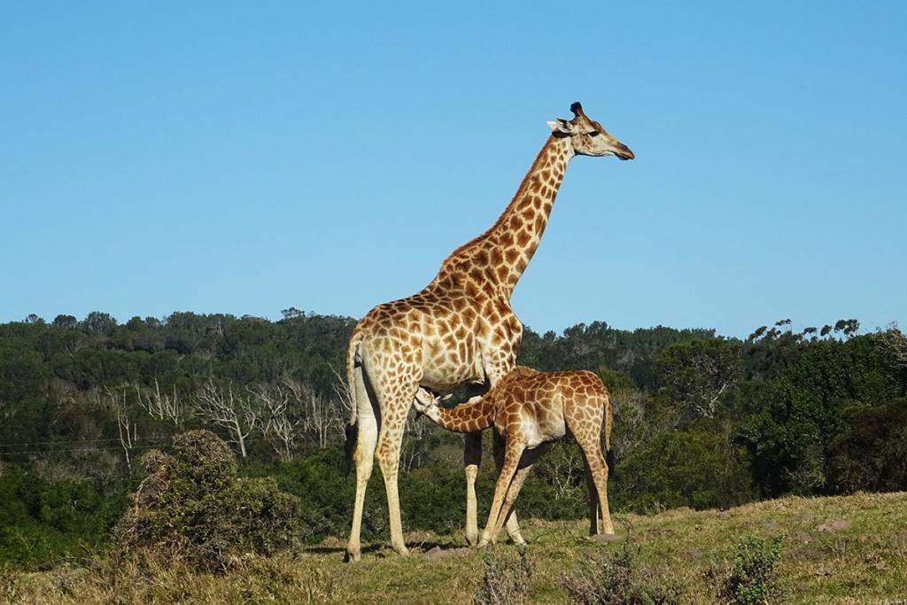 IRONMAN 70.3 WM SÜDAFRIKA Sven Pollert mit persönlicher Bestzeit / Die atemberaubende Tierwelt von Afrika auf unserer Safari © Pollert